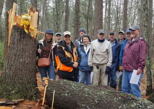 Yankee Woodlot tour group poses beside a large fallen tree.