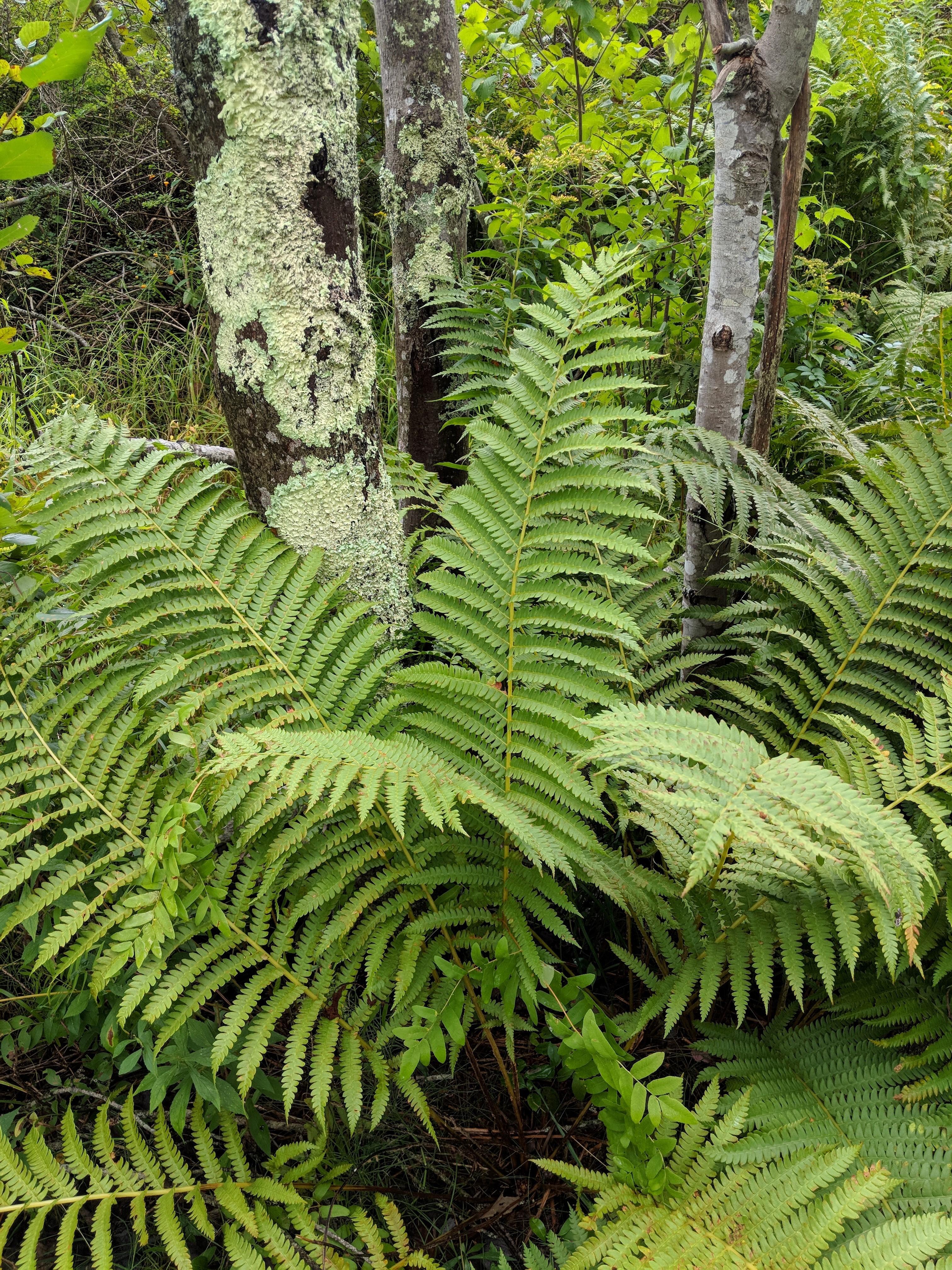 Ferns Ancient Plants Wells Reserve