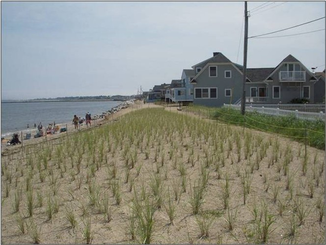 Ferry Beach Dune Restoration