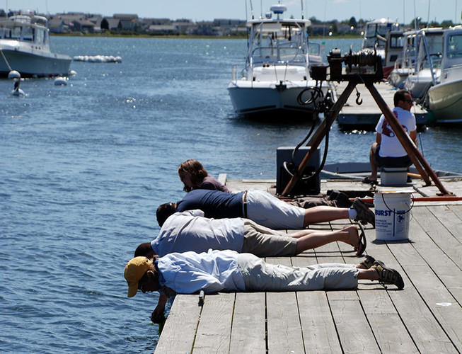 MIMIC volunteers work on the dock at Wells Harbor