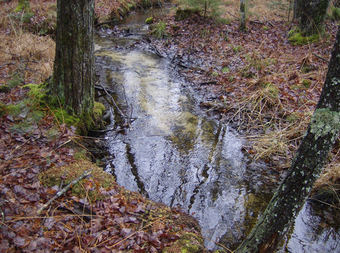A view of Eaton Brook, a tributary of the Merriland River