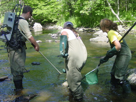 Electrofishing in the Kennebunk River, July 2011