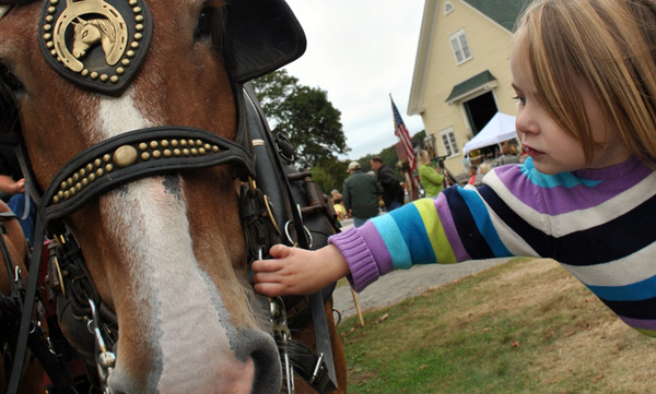 Little girl meets big horse at Punkinfiddle