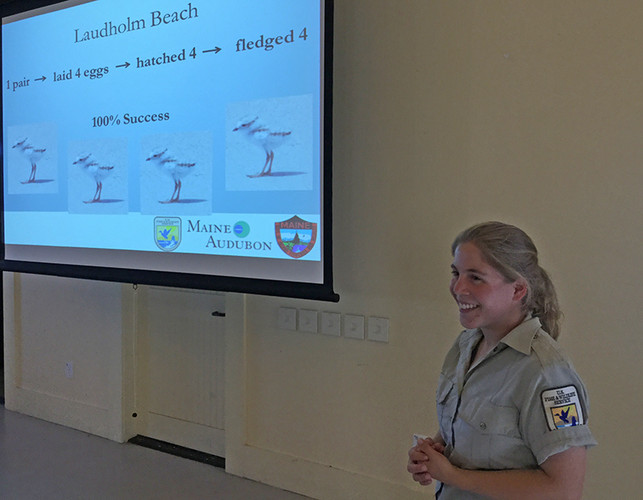 A slide showing that Laudholm Beach had one piping plover nest in 2015 and 4 chicks fledged. Pictured is Katrina Papanastassiou.