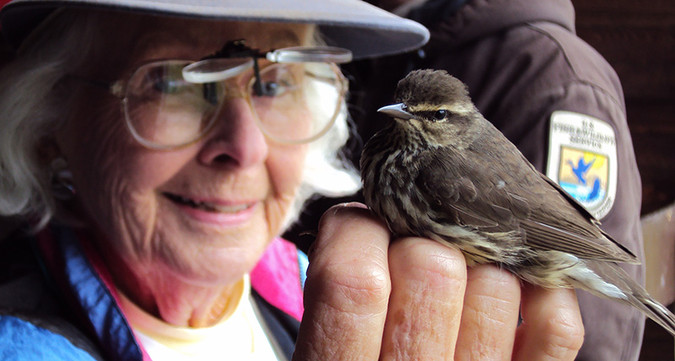 Master bird bander June Ficker holds a northern waterthrush during a demonstration at the Wells Reserve at Laudholm.