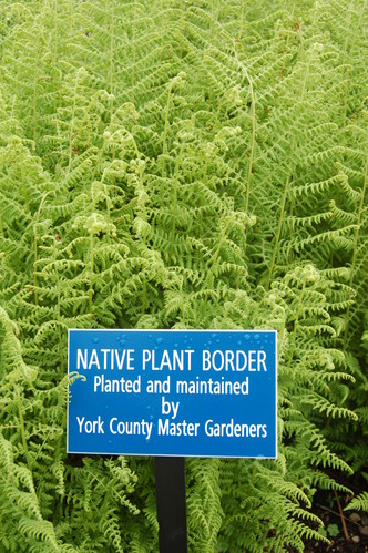 Ferns form a backdrop for a sign stating 'Native plant border planted and maintained by York County Master Gardeners.