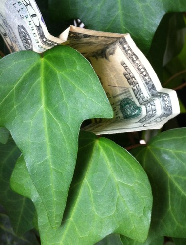 Money tree?
