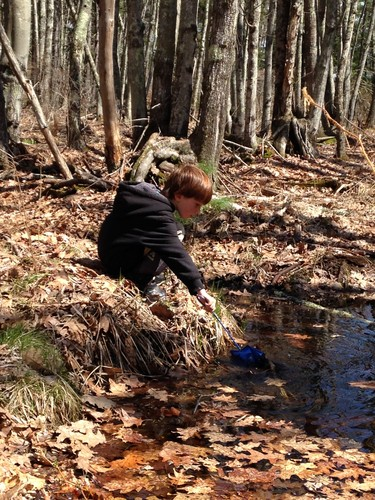 Dipping a net into a vernal pool