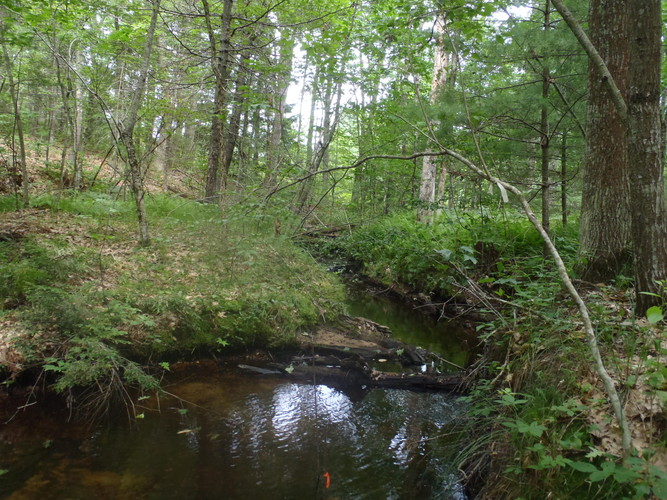 Trees and shrubs along a stream help slow stormwater