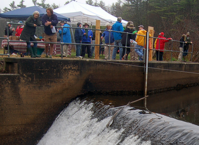 People congregate by the fish ladder after the dedication ceremony.
