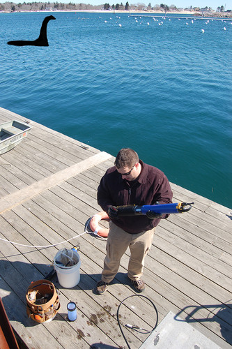 Jeremy Miller works on equipment at Wells Harbor, unaware of the mysterious creature that would soon swim under the dock where he stands. Is that Webby?