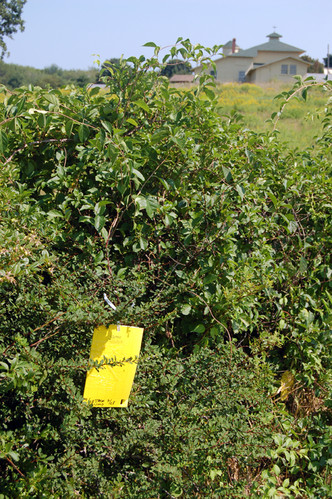 Insect trap set in barberry