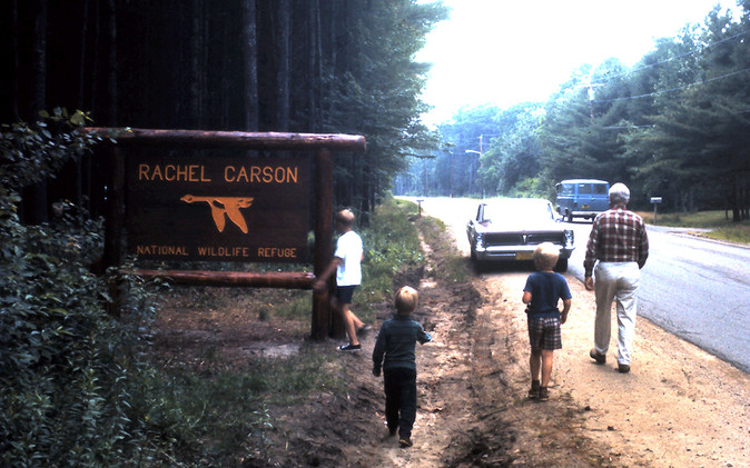 A summer 1970 visit to Rachel Carson National Wildlife Refuge.