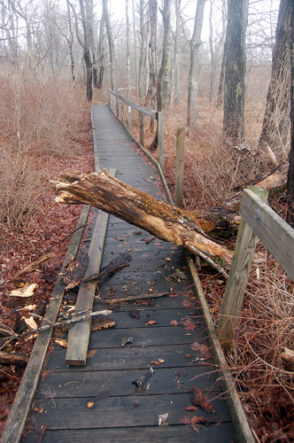 Fallen branch breaks boardwalk rail